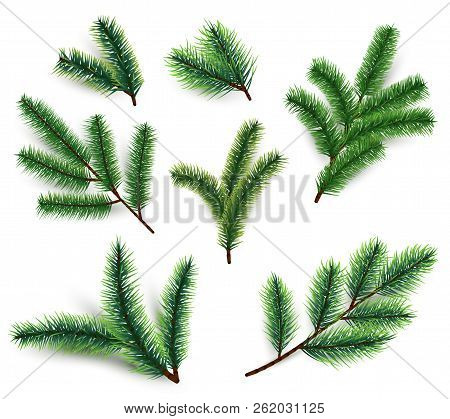 Fir Branches. Christmas Tree Branching Isolated. 3d Realistic Conifer Branch Set For Winter Holiday