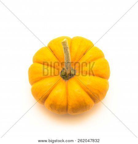 Studio Shot One Mini Pumpkin With Stem Isolate On White