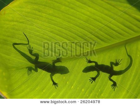 Silhouette of two lizards