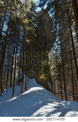 Sunny Winter Day Snow Covered Stony Boulder Rock View In Dark Wild Fir Forest.  Picturesque Hungaria