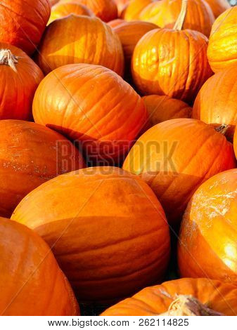 Halloween Pumpkins in market in a large pile