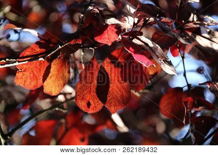 Red, orange and brown leaves during the autumn season in the sun at trees in Nieuwerkerk aan den ijs