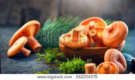 Raw wild Saffron milk cep mushrooms on dark old rustic background. Lactarius deliciosus, Rovellons, Niscalos mushroom closeup. Organic Fresh ceps on a table. Soft focus