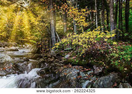 Autumn golden hours with sun rays