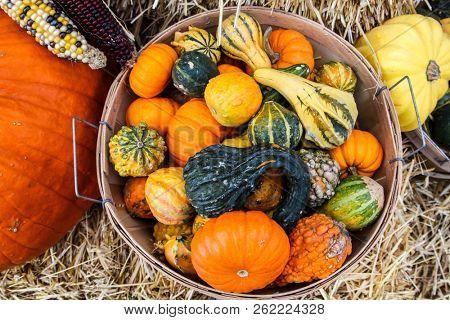 Pumpkins inside basket