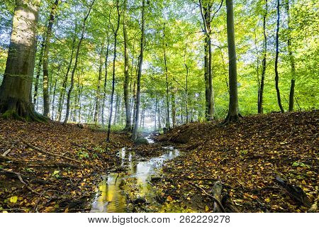 Autumn Meeting Spring In A Green Forest With A Small River