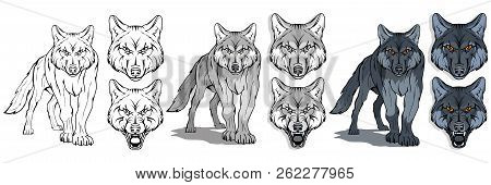 Wolf, Isolated On White Background, Colour Illustration, Suitable As Logo Or Team Mascot, Dangerous