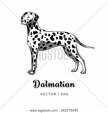 Vector Editable Colorful Image Depicting A Cute Spotty Dalmatian Dog Standing. Isolated On A White B