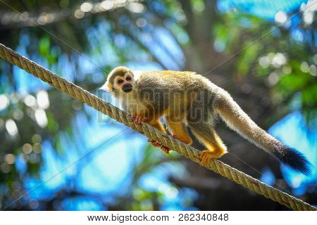 Squirrel Monkey On Branch Of Tree  Animals In Wilderness