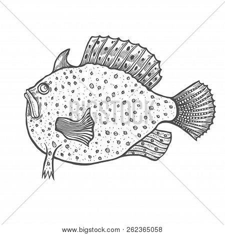 Funny Fish Engraving Style. Coloring Book For Adult And Kids, Antistress Coloring Pages. Hand Drawn