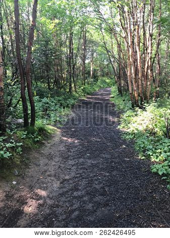 Beautiful pathway in forest