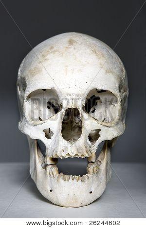 white skull against dark background