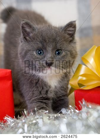 grey kitten and two red gift box poster