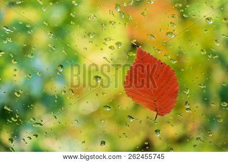 Red Leaf On Glass With Water Drops