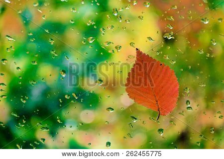 Red Leaf On Glass With Water Drops.