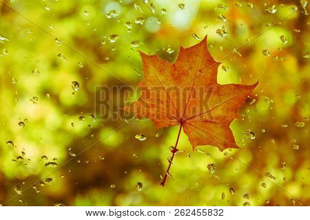 Red-yellow Leaf On The Glass With Water Drops.