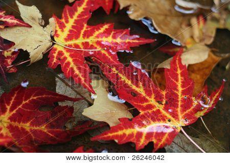 fallen leaves in water