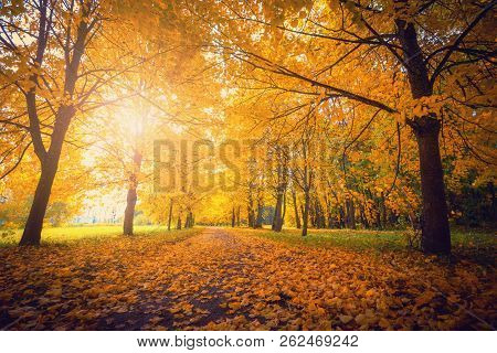 Autumn. Park With Yellow Trees. Fall Scenic Background. Autumn Landscape. Beautiful Autumn Morning I