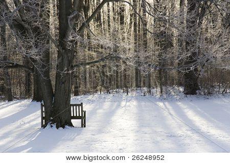 picturesque winter scene