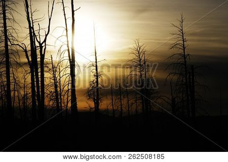 Mystery Landscape Of A Dark Tree Silhouette And A Sunset