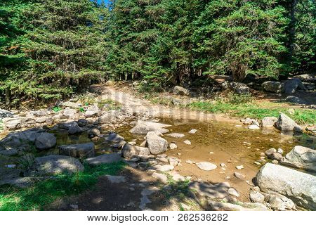 Small River Among Forest In Uludag National Park