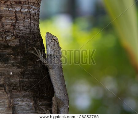 concentrated hunting lizard on the tree looking at you poster