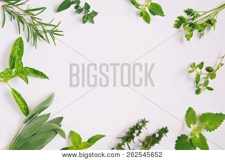 Fresh Spicy And Medicinal Herbs On White Background. Border From Various Herb - Rosemary, Oregano, S