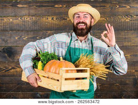 Man Cheerful Bearded Farmer Wear Apron Presenting Vegetables Pumpkin Wooden Background. Fresh Organi