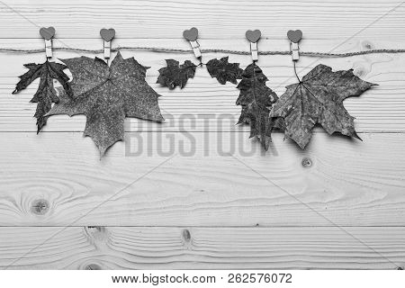 Autumn fallen leaves pinned on twine with tiny pins with hearts. Collection concept. Maple and oak dried leaf on natural wooden background. Autumn colorful leaves on wooden texture poster
