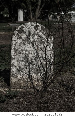 Old headstone/tombstone with small dried out tree in front poster