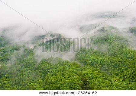 foggy forest view of Seorak-san National Park, South korea