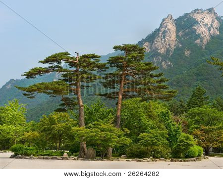 famous pair pines - symbol of Seoraksan National Park, South korea