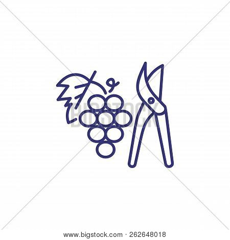 Pruning Grape Line Icon. Cutter, Plant, Fruit. Winemaking Concept. Vector Illustration Can Be Used F