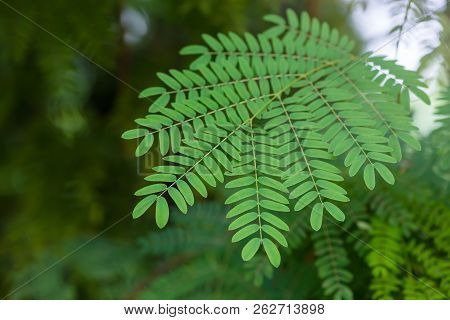 Fern Leaves Selective Focus  In The Forest In China