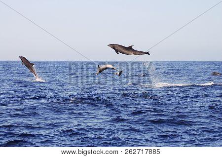 Jumping Dolphins - Galapagos Islands - Ecuador