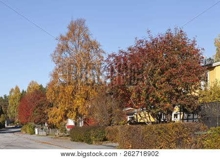 Beautiful, Colorful Trees And Bushes This Side Buildings In An Urban Area. Street, Road In Sunshine.