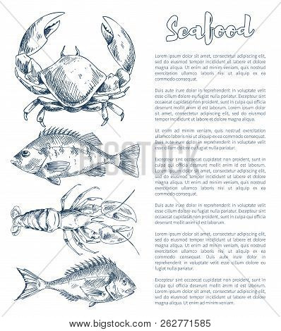 Big Lobster And Crayfish, Bream Or Bass Snack Seafood Vintage Hand Drawn Vector Illustration Poster