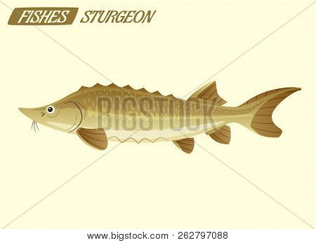 Fish Sturgeon Character. Cartoon Vector Illustration. Fishing Or Food Concept