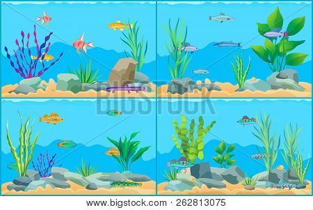 Colorful Aquarium Fishes In Blue Water Promo Poster. Multicolored Sea Animals, Green Water Plants An