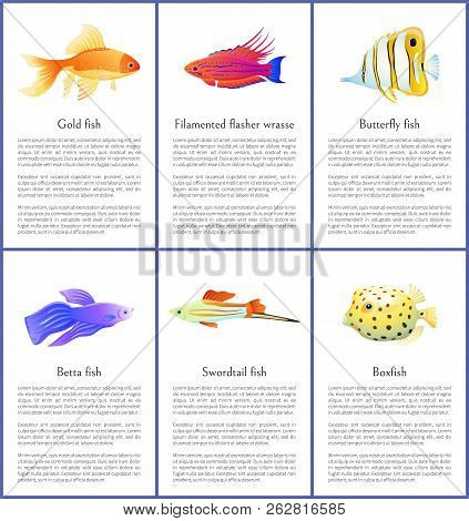 Set Of Marine And Domestic Fishes Color Banners, Gold And Butterfly Water Habitats With Swordtail An