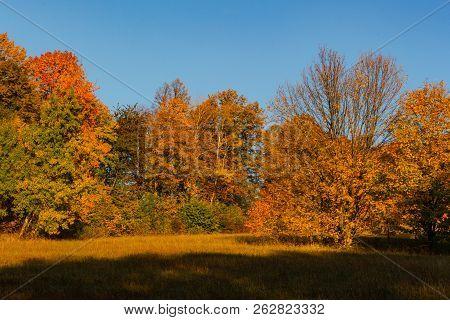 Autumn Trees In Sunny Autumn Park Lit By Sunshine - Sunny Autumn Landscape In Bright Sunlight. Autum