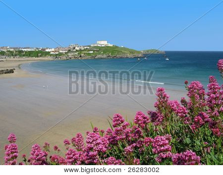 Great Western beach and red valerian (Centranthus ruber) in Newquay, Cornwall UK