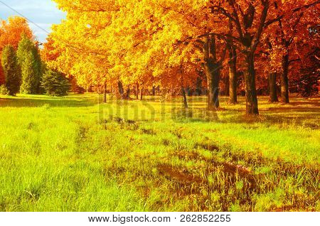 Fall landscape. Golden fall park trees and flooded lawn in the fall park in sunny fall weather. Colorful fall nature scene