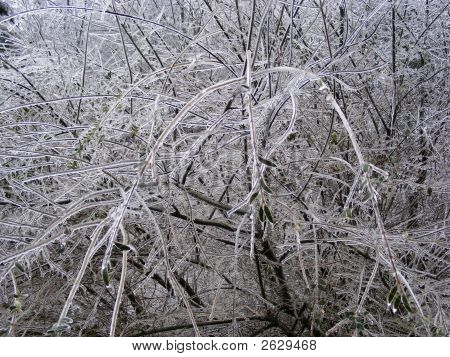 Ice Laden Tree Branches