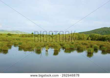 The Lake Calm Waters And Aquatic Plants.the Distant Background.