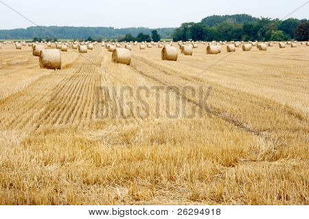 Agricultural field