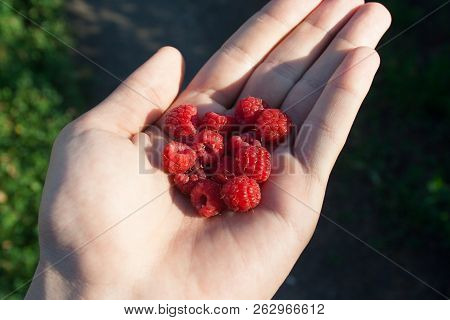 Raspberry In The Human Hand