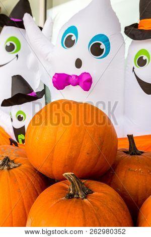 Harvest Pumpkin Rice Straw Background.