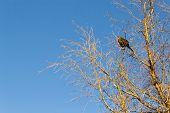 ave arriba de unas ramas encima de un arbol seco por la mañana poster