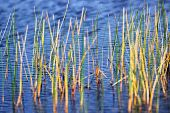 Everglades sawgrass and pond in the Florida Everglades poster